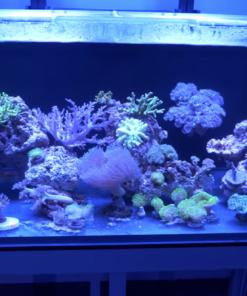 Clear-For-Life 100 Gallon Rectangle Aquarium