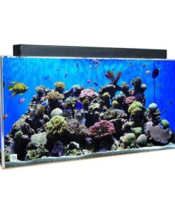 Buy Clear-For-Life 240 Gallon